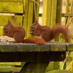 Grundeinstellung zum Sparen / Die Sparhörnchenfamilie